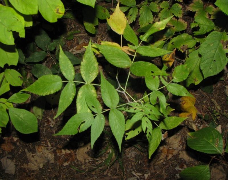 Plantesà identifier de sous bois # Plantes De Sous Bois Liste