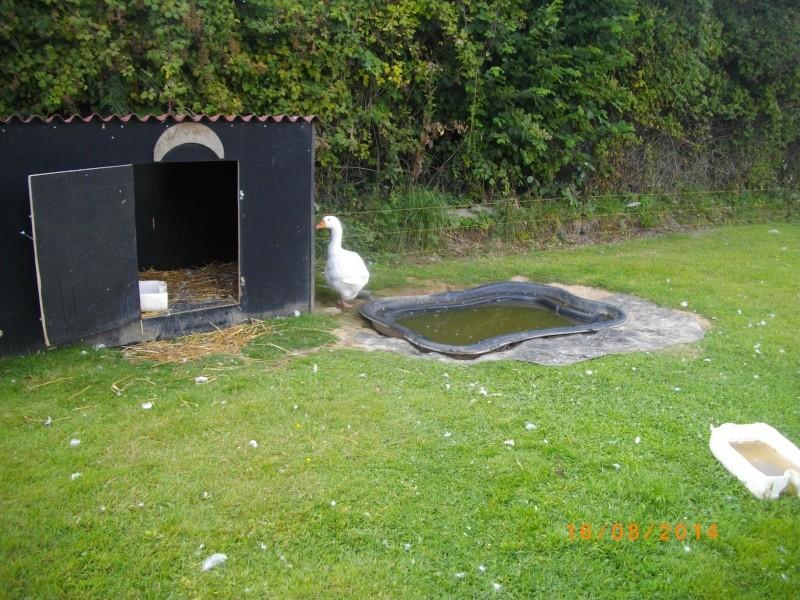 Du nouveaux dans mes parcs photos - Bassin canard d ornement pau ...