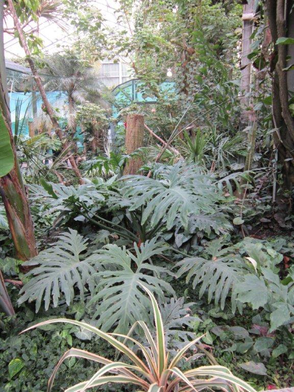 Visite du zoo de beauval for Zoo exterieur