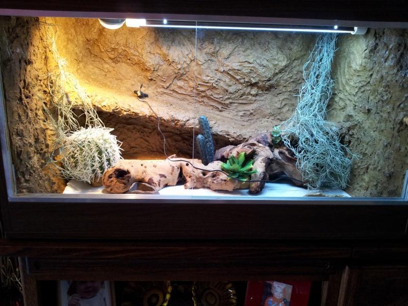 Fabrication du terrarium de pongo mon pogona - Decor fond terrarium desertique ...