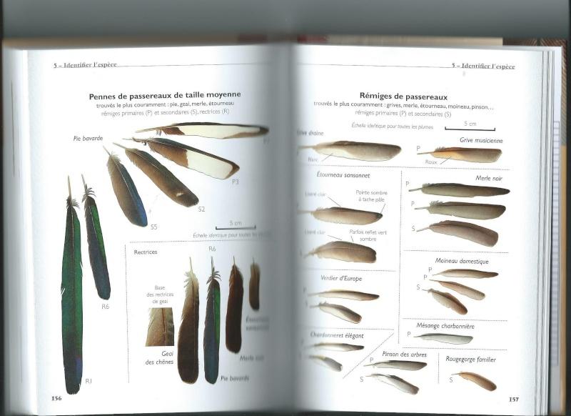 Les livres sur les plumes - Signification des plumes d oiseaux ...