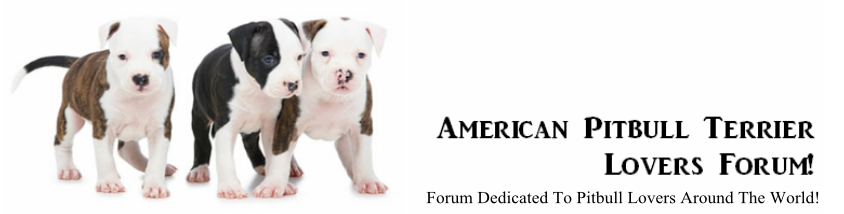 American Pitbull Terrier Lovers Forum