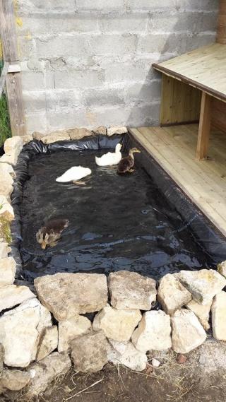 Mes petits canards - Bassin canard beton orleans ...