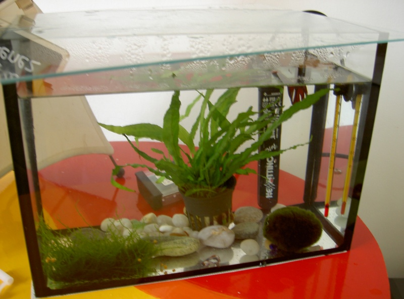 Plante et bac non filtr for Filtre bac a poisson