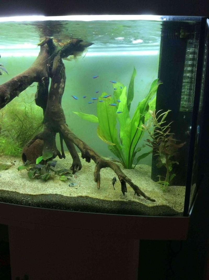 aquarium juwel rio 450 l. Black Bedroom Furniture Sets. Home Design Ideas