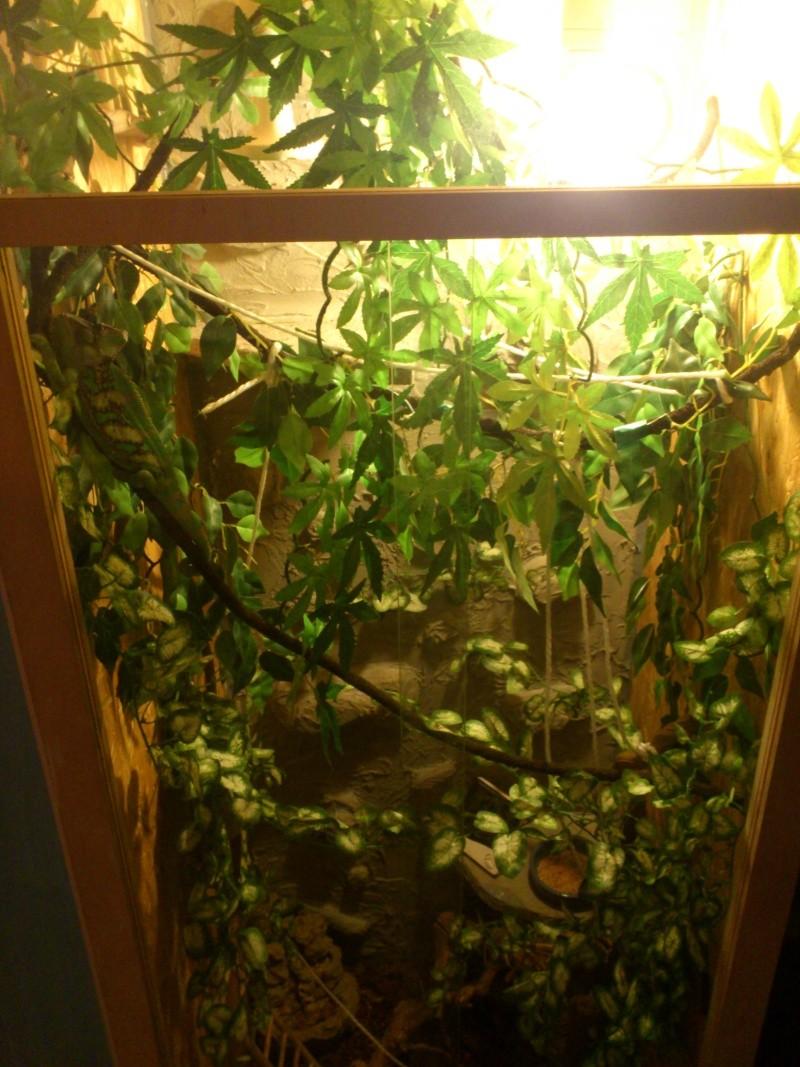 decor terrarium cameleon