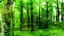 Bosque de Harkur