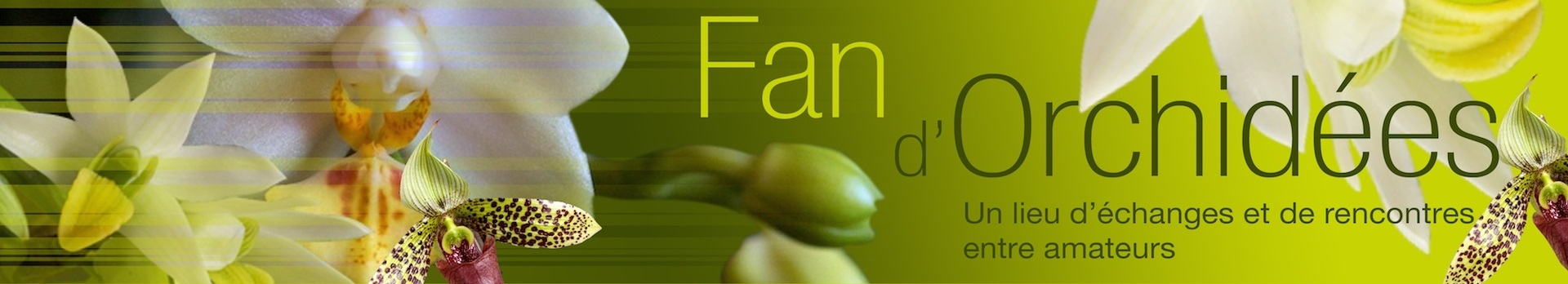 Fan d'Orchidées