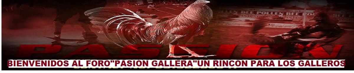 PASION GALLERA