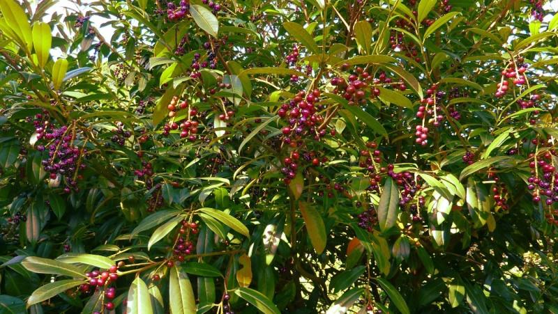 Fleurs arbres plantes et insectes exceptionnels page 3 for Arbres plantes fleurs