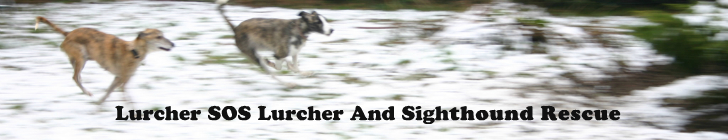 Lurcher SOS Lurcher and Sighthound Rescue