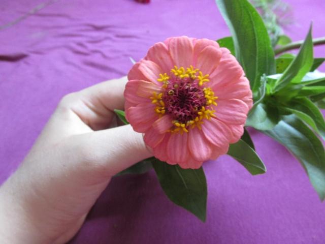 très jolie petite fleur !!! quel est son nom ?[= Zinnia] - Au ...