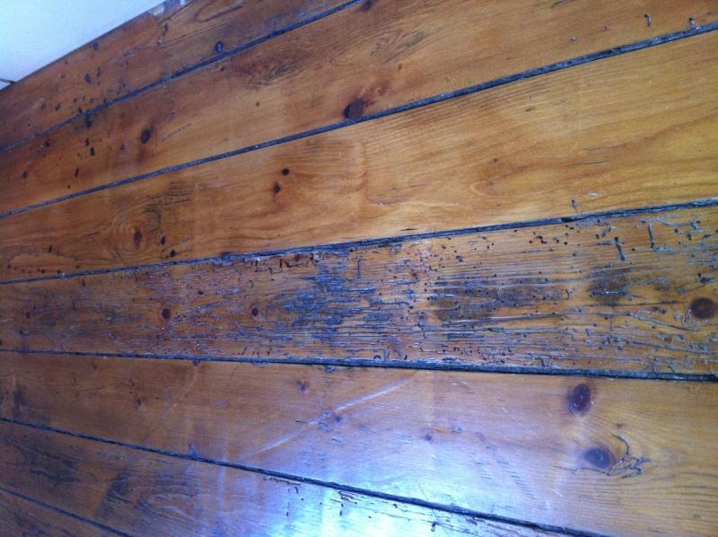 Insecte appartement et petit trou parquet for Insecte parquet