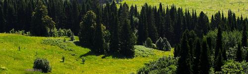 The Krasen Forest