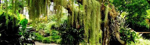 Pluviae Forest
