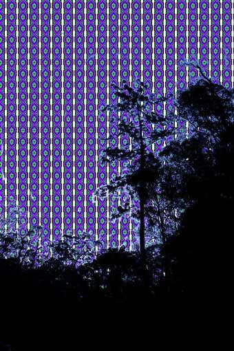 treesw10.jpg