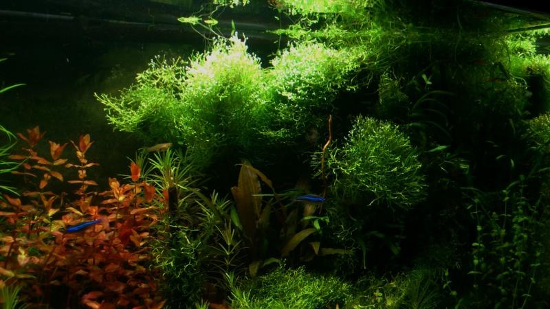 Vos plus belles photos aquariophile page 16 for Bac a poisson 500l