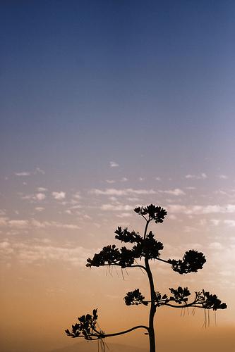arbre devant le ciel