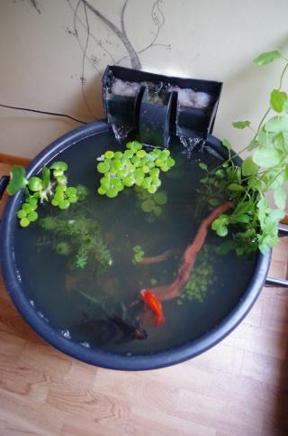 Mini bassin d 39 int rieur page 2 - Creer un bassin d ornement avignon ...