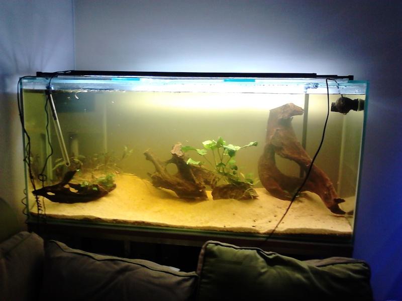R solu un grand bac et des petits poissons taeniacara for Grand bac a poisson