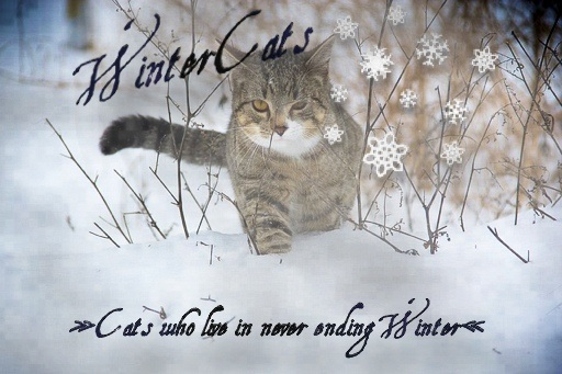 Wintercats - Sei eine echte Warrior Cat