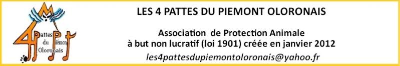 LES 4 PATTES DU PIEMONT OLORONAIS