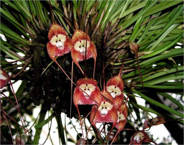 hallo freunde wie vermehre ich diese orchidee aus samen gast. Black Bedroom Furniture Sets. Home Design Ideas