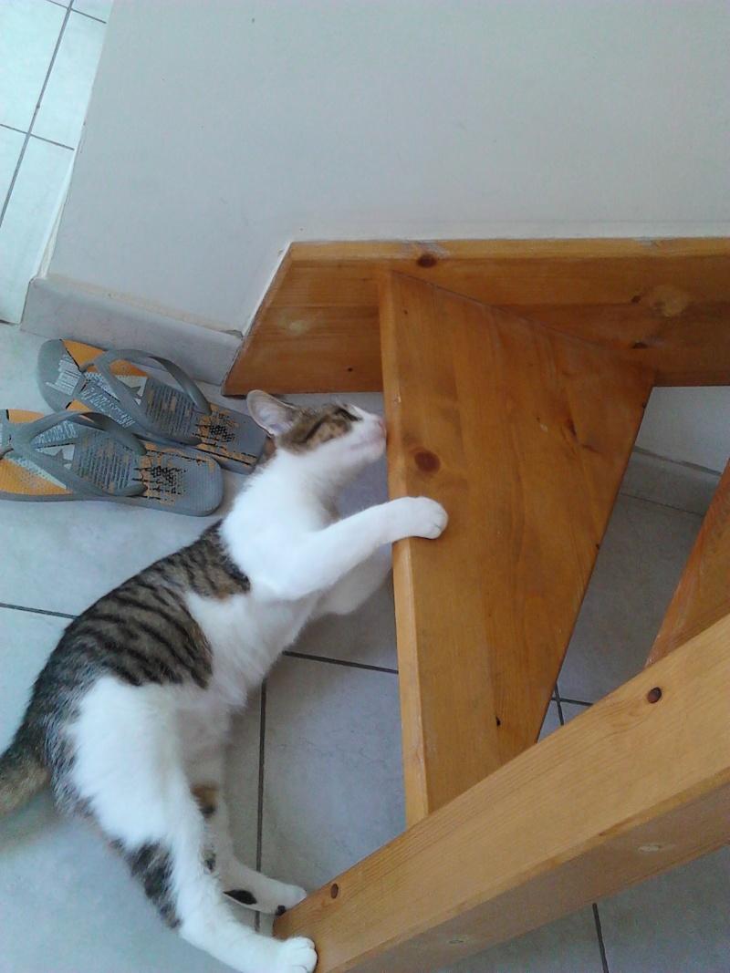 Janet chaton femelle maltrait e 4 mois 1 2 page 2 - Couper les griffes d un chaton de 2 mois ...