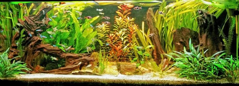 aquarium 280 litres communautaire