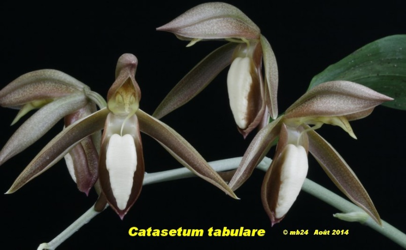 catase81.jpg