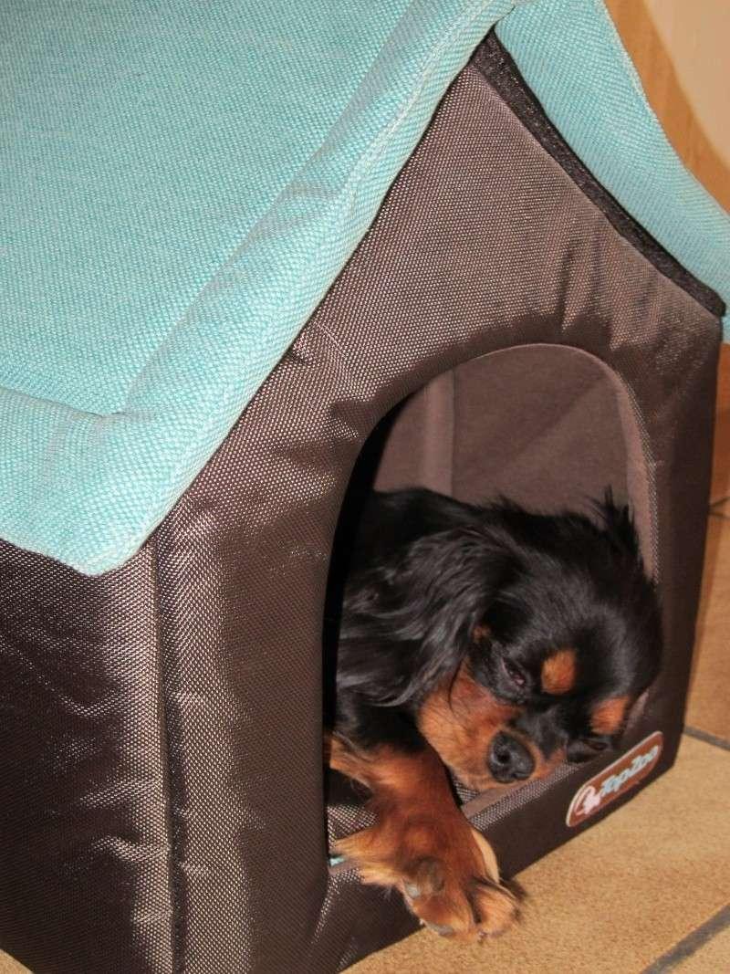 quel dodo pour petit chien page 3. Black Bedroom Furniture Sets. Home Design Ideas