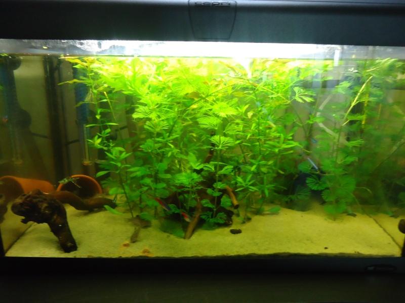 conseil aquarium pour débutant