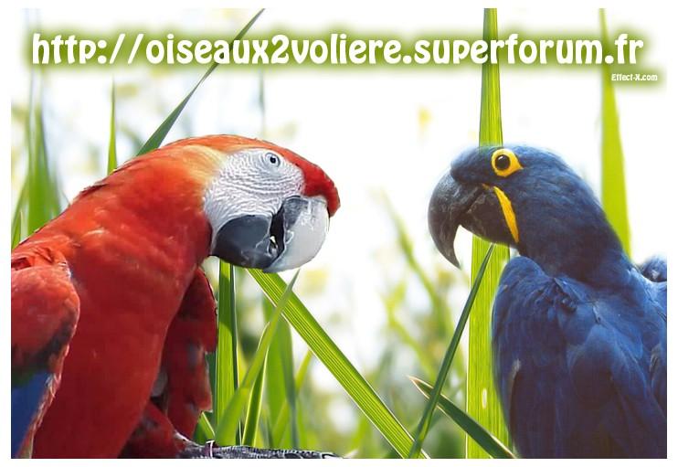 Oiseaux 2 Voliere