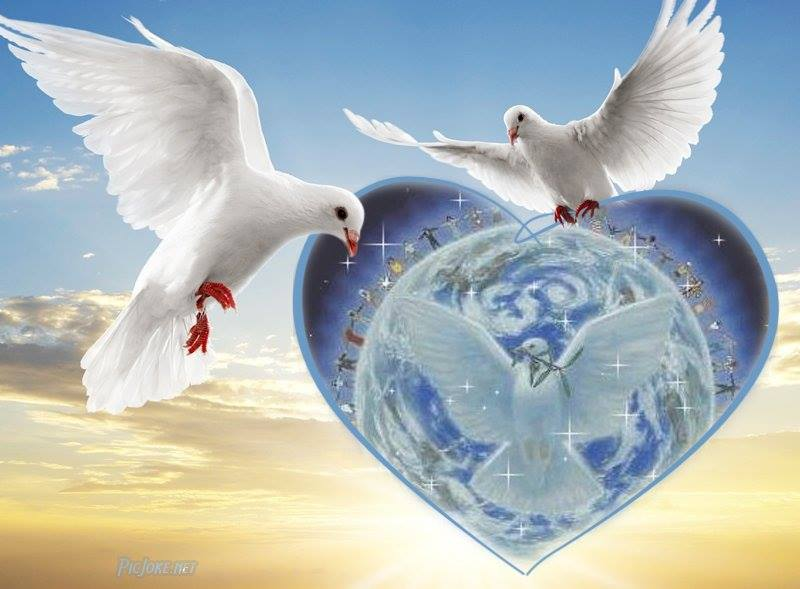 colombe coeur gaia