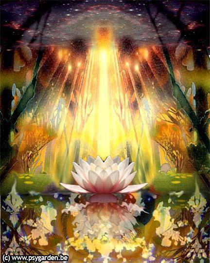 lotus lumiere
