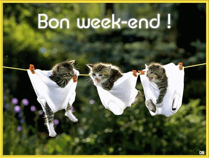 week end chatons