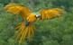 Папуги, Parrots