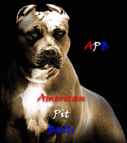 American Pit Bulls Association