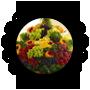 خضروات وفواكة صحية