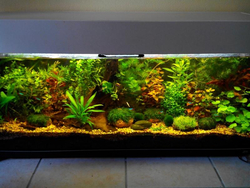 Aquarium de 300 litres en aquascaping ou hollandais for Vendeur aquarium